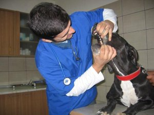 EqvineVet - clinica veterinara Bucuresti