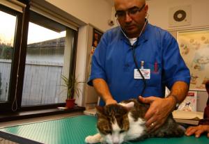 Dragos Boghean medic veterinar Univet Iasi.png